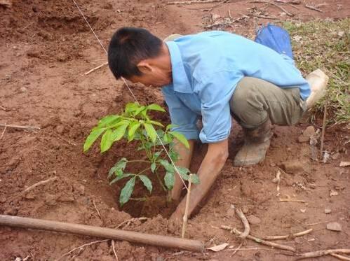 植树的步骤和方法图文